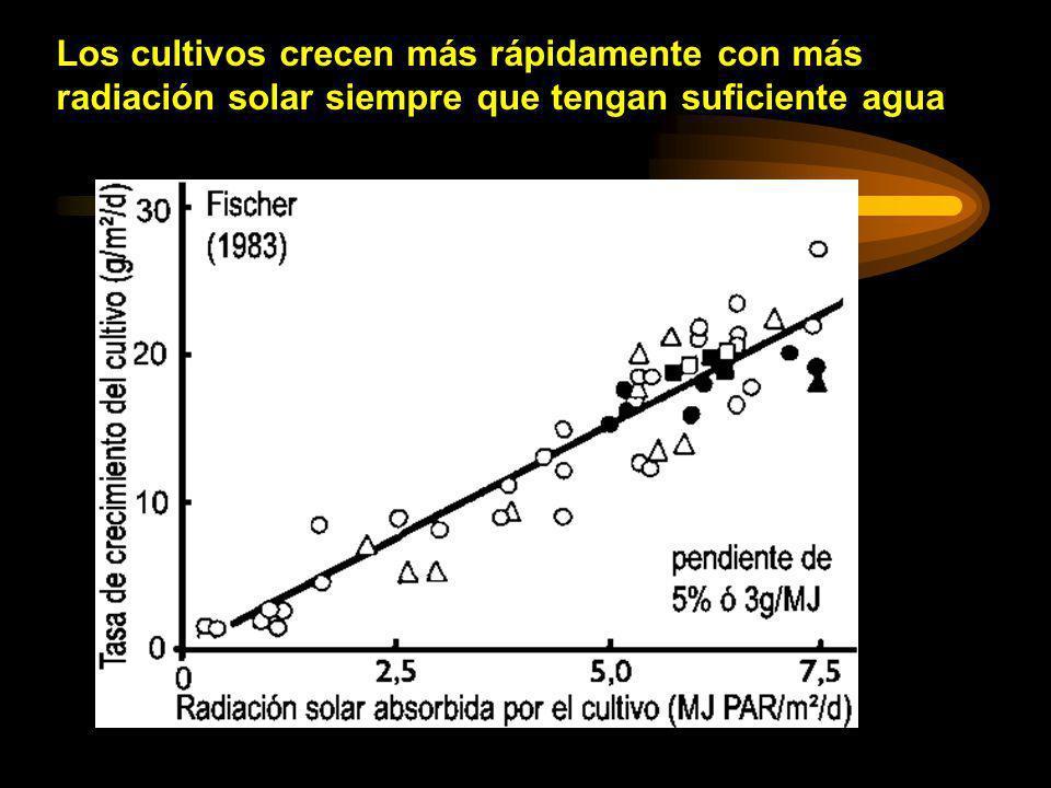 Los cultivos crecen más rápidamente con más radiación solar siempre que tengan suficiente agua