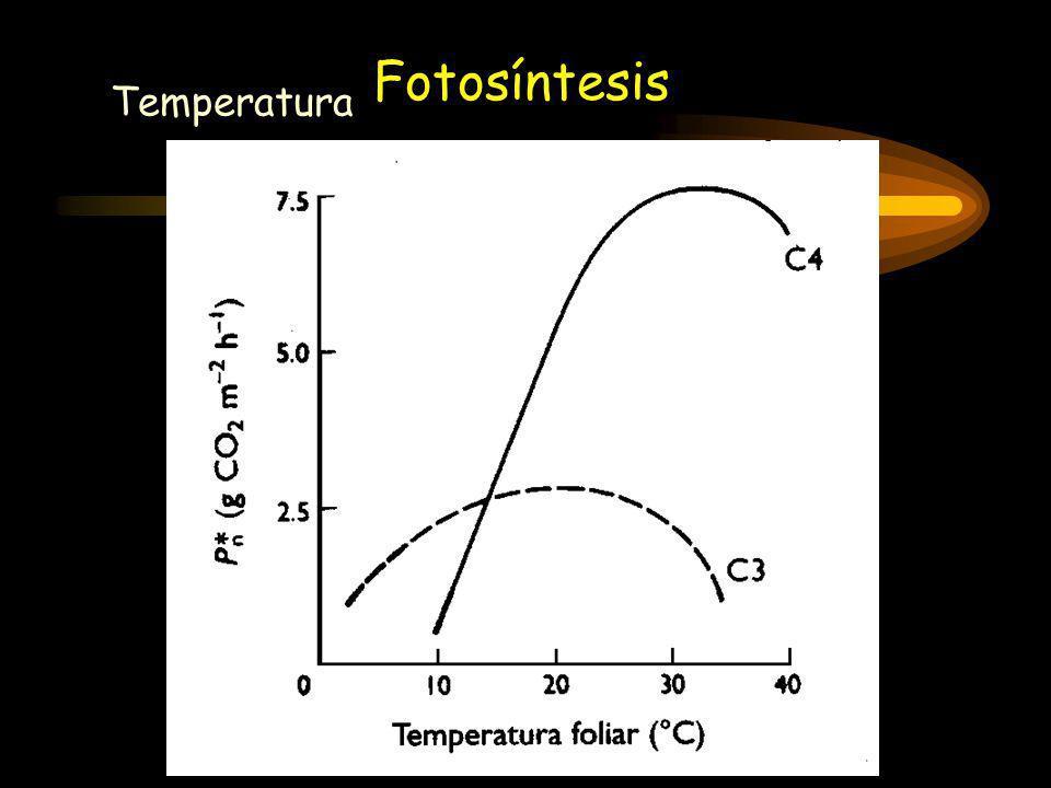 Temperatura Fotosíntesis