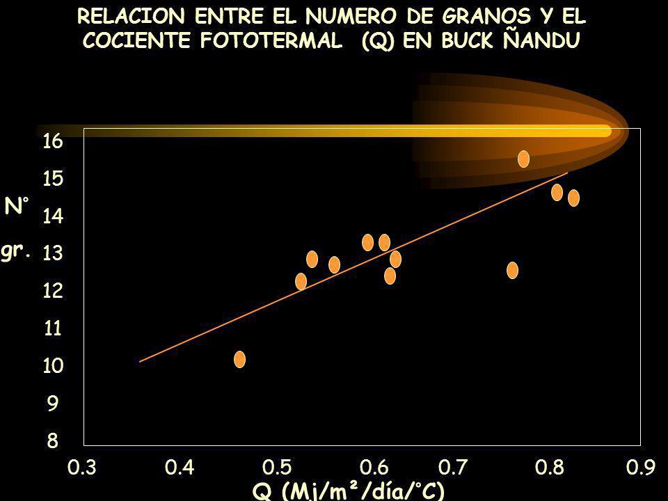 RELACION ENTRE EL NUMERO DE GRANOS Y EL COCIENTE FOTOTERMAL (Q) EN BUCK ÑANDU 0.3 0.4 0.5 0.6 0.70.8 0.9 Q (Mj/m²/día/°C) 16 15 14 13 12 11 10 9 8 N°