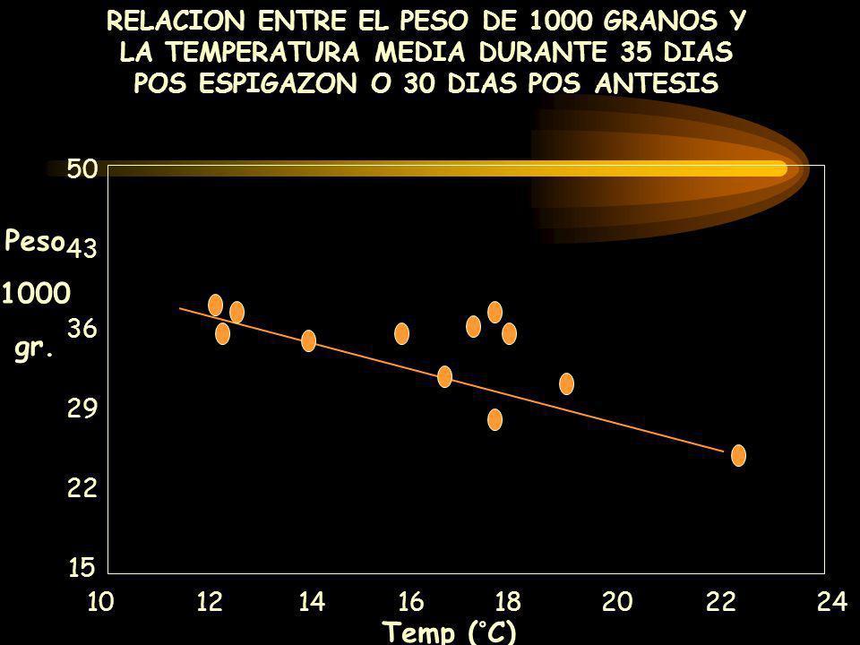 RELACION ENTRE EL PESO DE 1000 GRANOS Y LA TEMPERATURA MEDIA DURANTE 35 DIAS POS ESPIGAZON O 30 DIAS POS ANTESIS 10 12 14 16 18 20 22 24 Temp (°C) 50