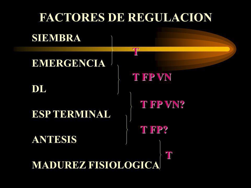 SIEMBRA EMERGENCIA DL ESP TERMINAL ANTESIS MADUREZ FISIOLOGICA FACTORES DE REGULACION T T FP VN T FP VN? T FP? T