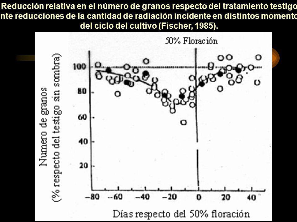 Reducción relativa en el número de granos respecto del tratamiento testigo ante reducciones de la cantidad de radiación incidente en distintos momento