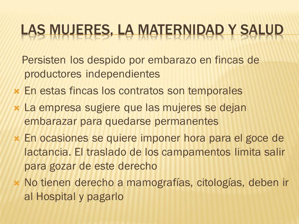 Persisten los despido por embarazo en fincas de productores independientes En estas fincas los contratos son temporales La empresa sugiere que las muj