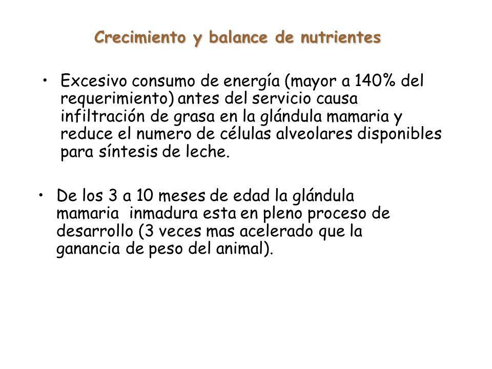 Crecimiento y balance de nutrientes Excesivo consumo de energía (mayor a 140% del requerimiento) antes del servicio causa infiltración de grasa en la glándula mamaria y reduce el numero de células alveolares disponibles para síntesis de leche.