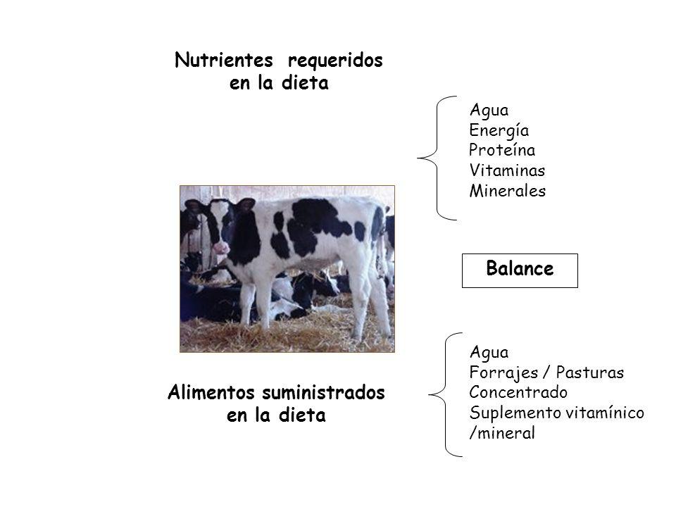 Agua Energía Proteína Vitaminas Minerales Agua Forrajes / Pasturas Concentrado Suplemento vitamínico /mineral Nutrientes requeridos en la dieta Alimentos suministrados en la dieta Balance