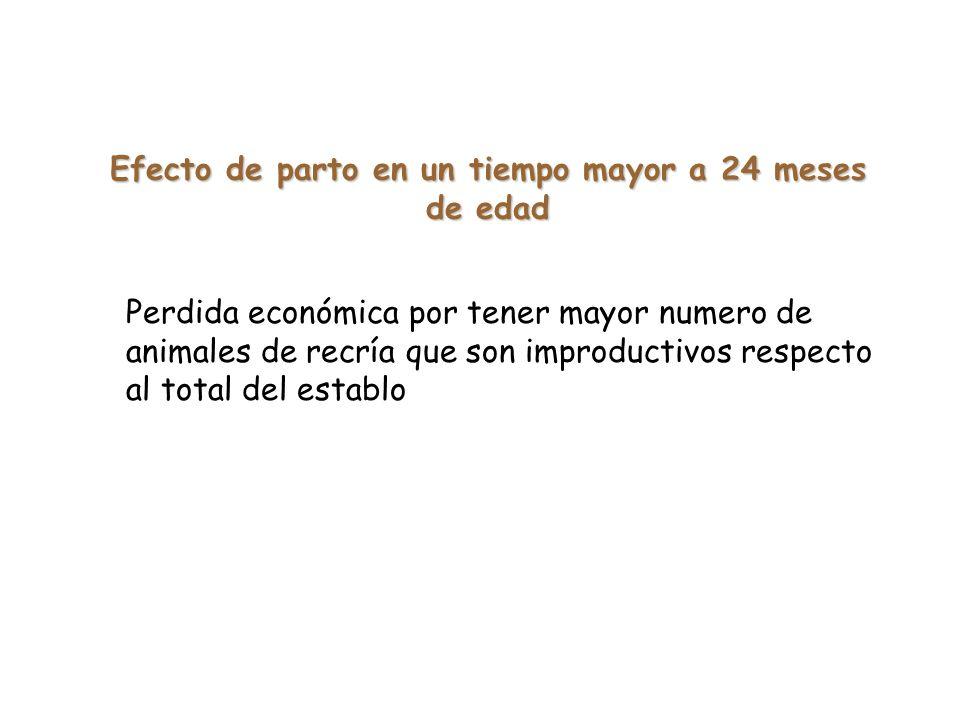 Efecto de parto en un tiempo mayor a 24 meses de edad Perdida económica por tener mayor numero de animales de recría que son improductivos respecto al total del establo