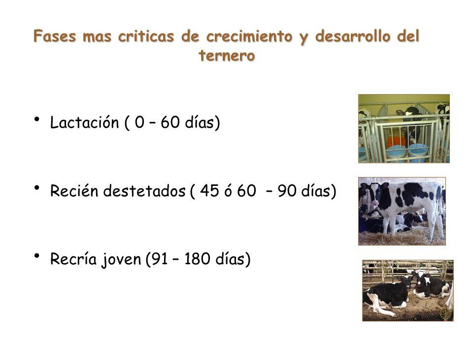 Fases mas criticas de crecimiento y desarrollo del ternero Lactación ( 0 – 60 días) Recién destetados ( 45 ó 60 – 90 días) Recría joven (91 – 180 días)