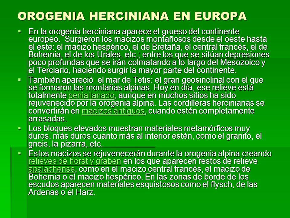 OROGENIA HERCINIANA EN EUROPA En la orogenia herciniana aparece el grueso del continente europeo. Surgieron los macizos montañosos desde el oeste hast
