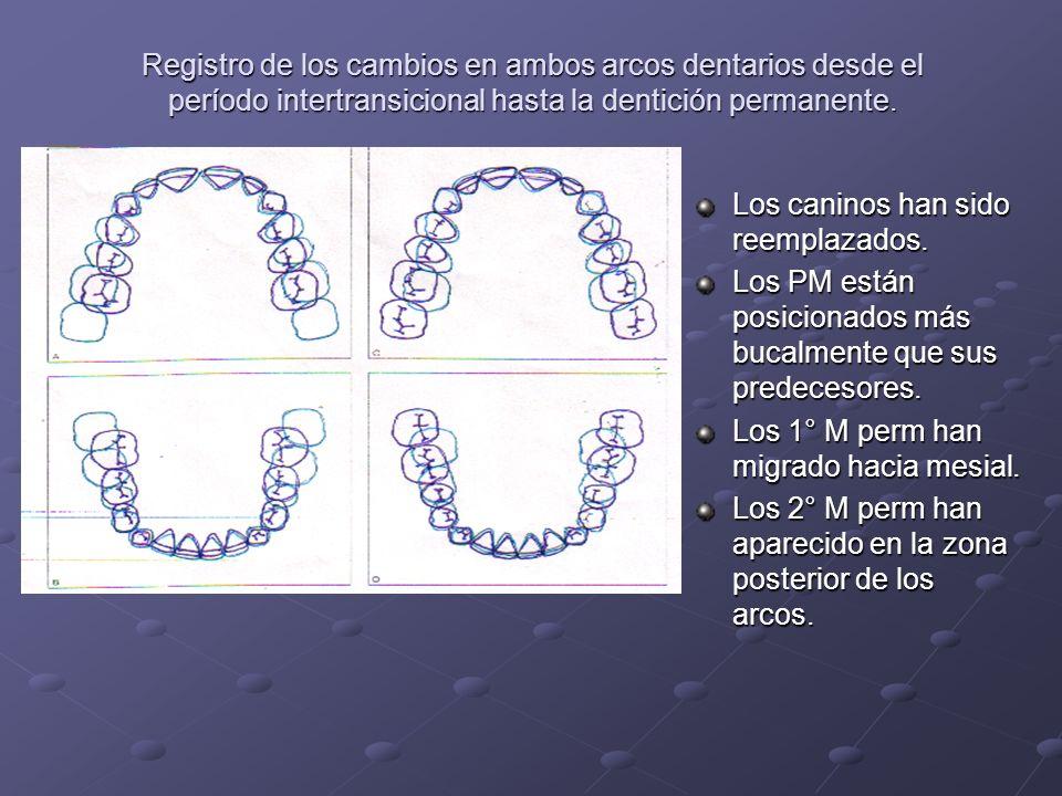 Registro de los cambios en ambos arcos dentarios desde el período intertransicional hasta la dentición permanente. Los caninos han sido reemplazados.