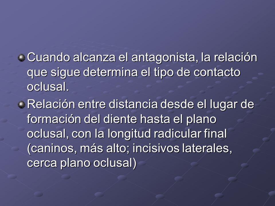 Cuando alcanza el antagonista, la relación que sigue determina el tipo de contacto oclusal. Relación entre distancia desde el lugar de formación del d