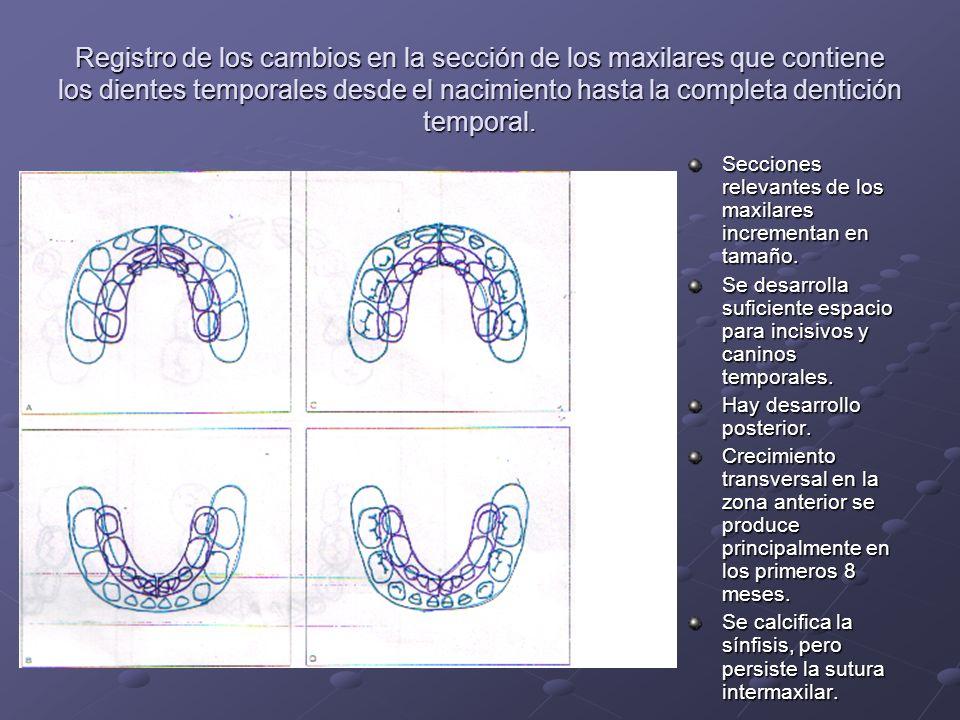 Registro de los cambios en ambos arcos dentarios desde la etapa de dentición completa al período transicional.