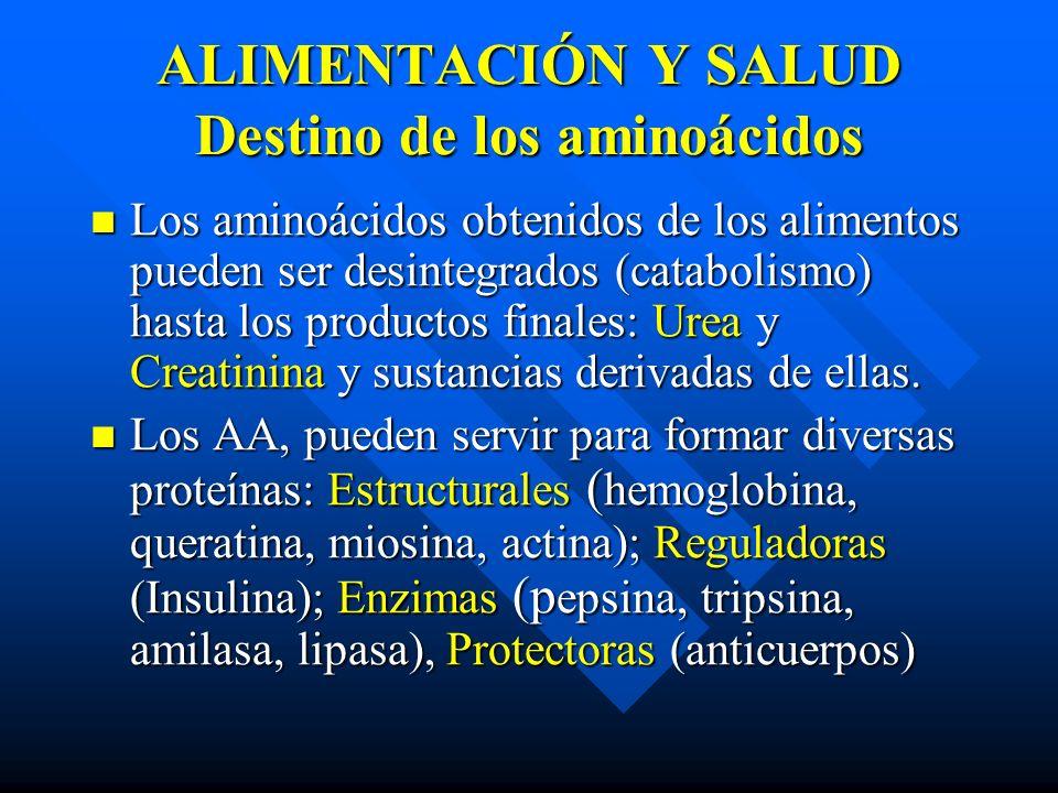 ALIMENTACIÓN Y SALUD Destino de los aminoácidos Los aminoácidos obtenidos de los alimentos pueden ser desintegrados (catabolismo) hasta los productos finales: Urea y Creatinina y sustancias derivadas de ellas.