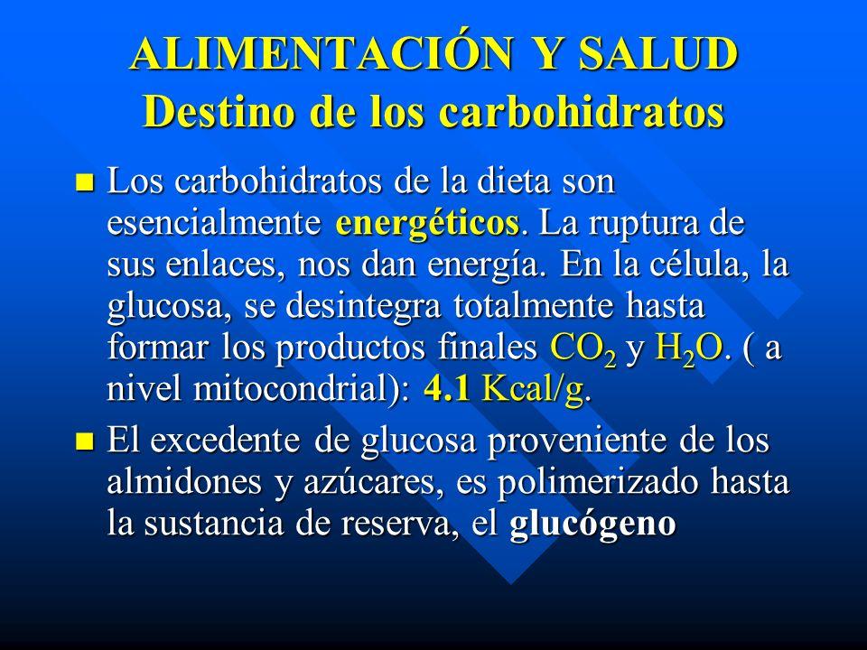 ALIMENTACIÓN Y SALUD Destino de los carbohidratos Los carbohidratos de la dieta son esencialmente energéticos.
