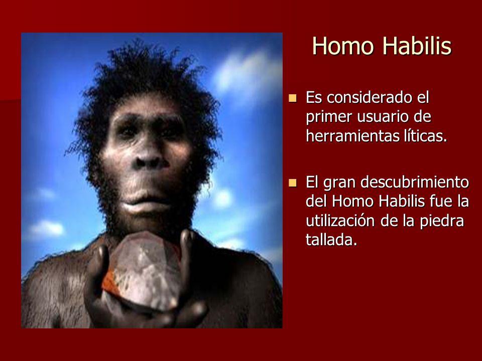 Homo Habilis Es considerado el primer usuario de herramientas líticas. Es considerado el primer usuario de herramientas líticas. El gran descubrimient