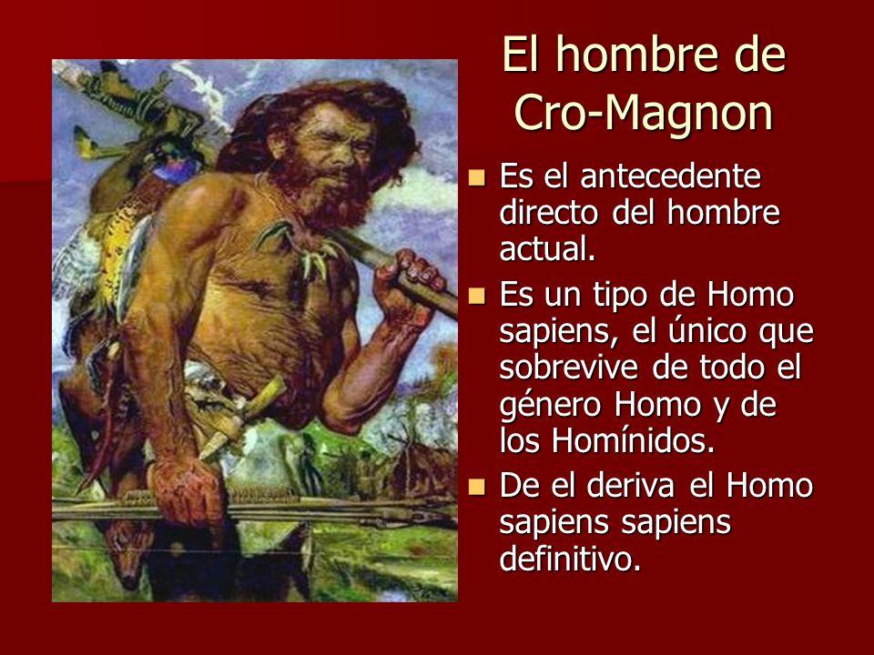 El hombre de Cro-Magnon Es el antecedente directo del hombre actual. Es el antecedente directo del hombre actual. Es un tipo de Homo sapiens, el único