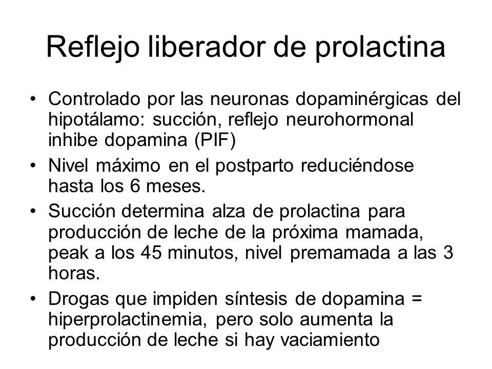 Reflejo liberador de prolactina Controlado por las neuronas dopaminérgicas del hipotálamo: succión, reflejo neurohormonal inhibe dopamina (PIF) Nivel