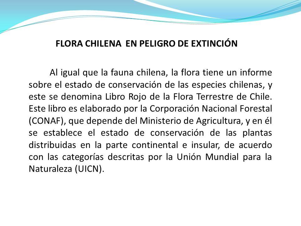FLORA CHILENA EN PELIGRO DE EXTINCIÓN Al igual que la fauna chilena, la flora tiene un informe sobre el estado de conservación de las especies chilena