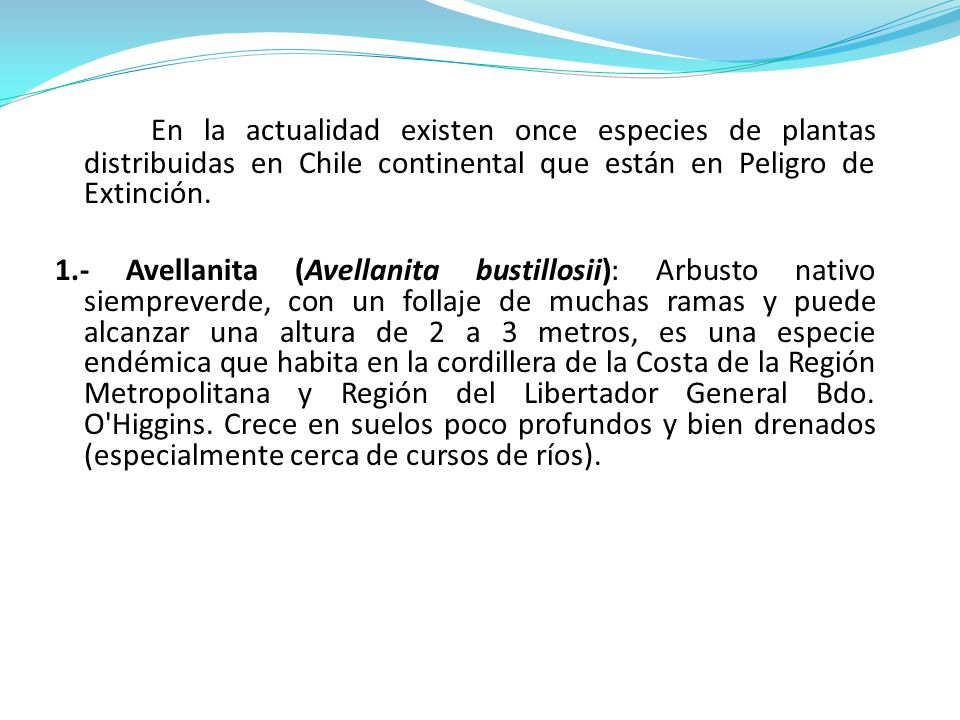 En la actualidad existen once especies de plantas distribuidas en Chile continental que están en Peligro de Extinción. 1.- Avellanita (Avellanita bust