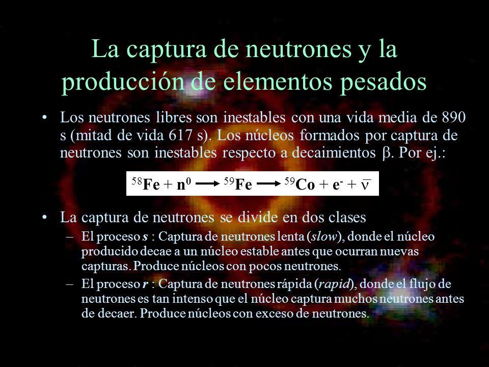 La captura de neutrones y la producción de elementos pesados Los neutrones libres son inestables con una vida media de 890 s (mitad de vida 617 s). Lo