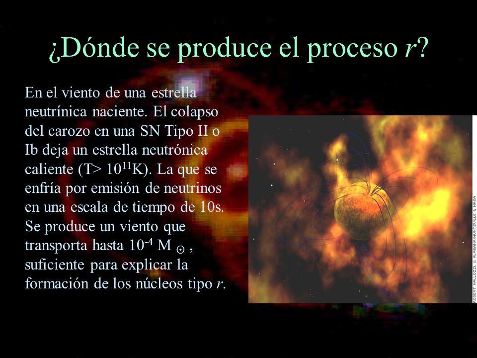 ¿Dónde se produce el proceso r? En el viento de una estrella neutrínica naciente. El colapso del carozo en una SN Tipo II o Ib deja un estrella neutró