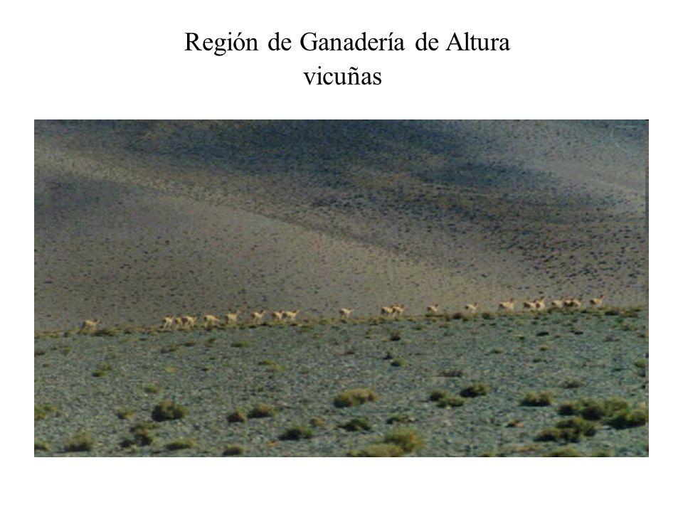 Región de Ganadería de Altura Llamas Puna: temp.media anual: 10º C; Precip.