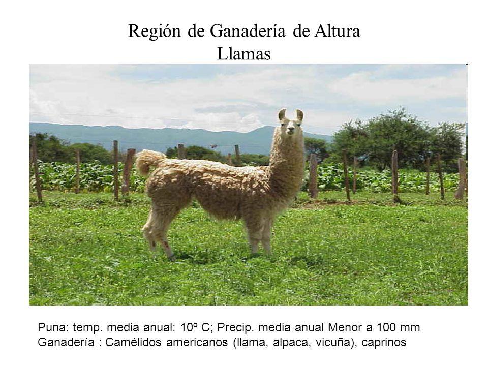 Región de Ganadería de Altura Llamas Puna: temp. media anual: 10º C; Precip. media anual Menor a 100 mm Ganadería : Camélidos americanos (llama, alpac