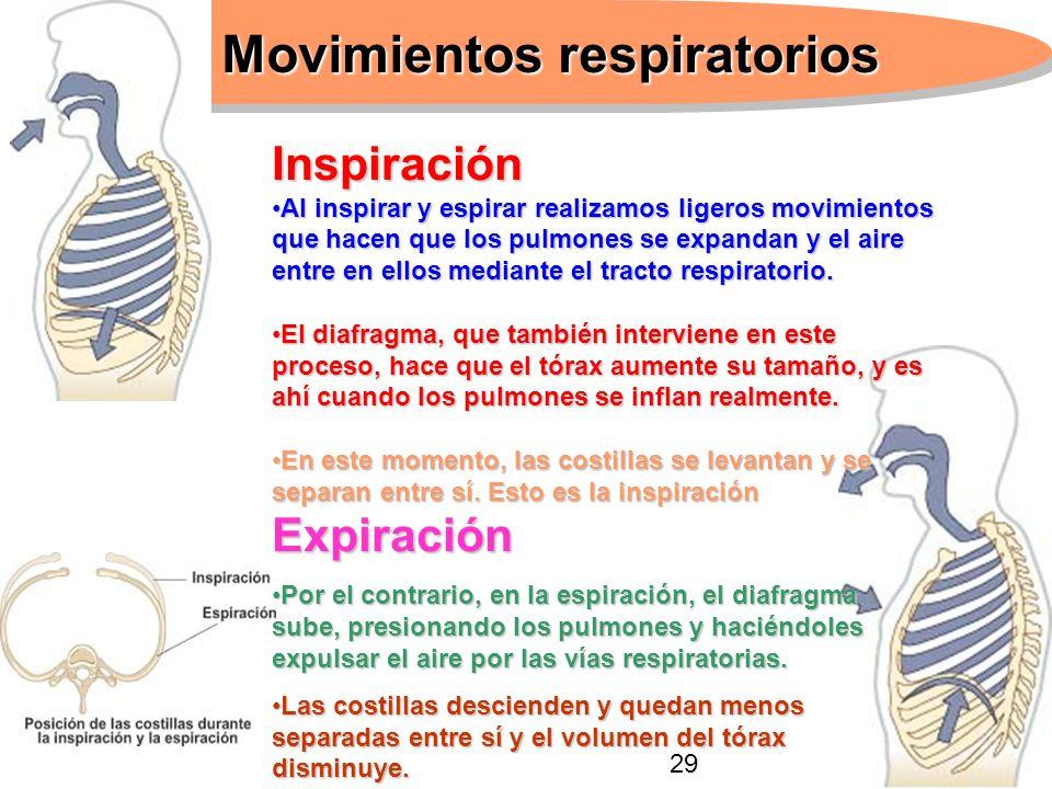 Movimientos respiratorios Inspiración Al inspirar y espirar realizamos ligeros movimientos que hacen que los pulmones se expandan y el aire entre en e