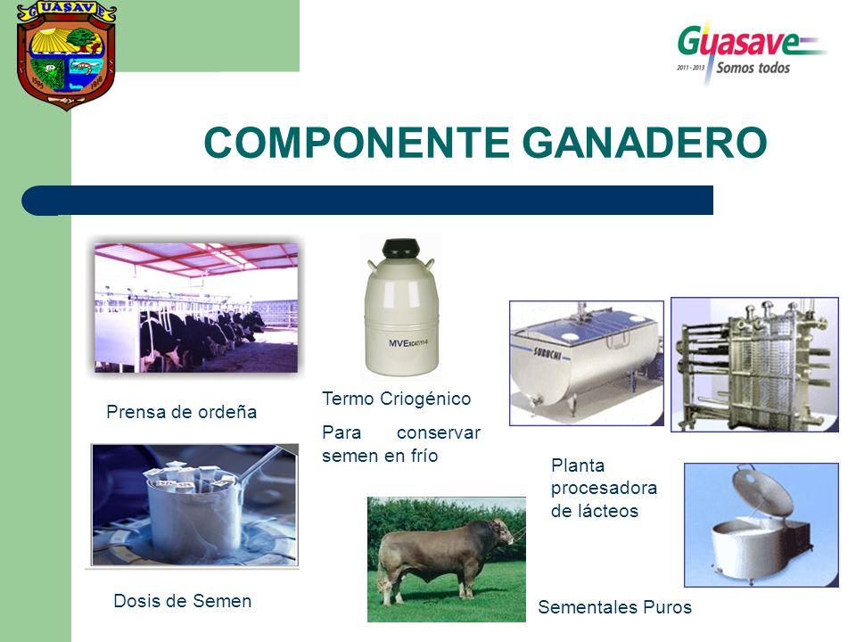 COMPONENTE GANADERO Prensa de ordeña Termo Criogénico Para conservar semen en frío Dosis de Semen Sementales Puros Planta procesadora de lácteos