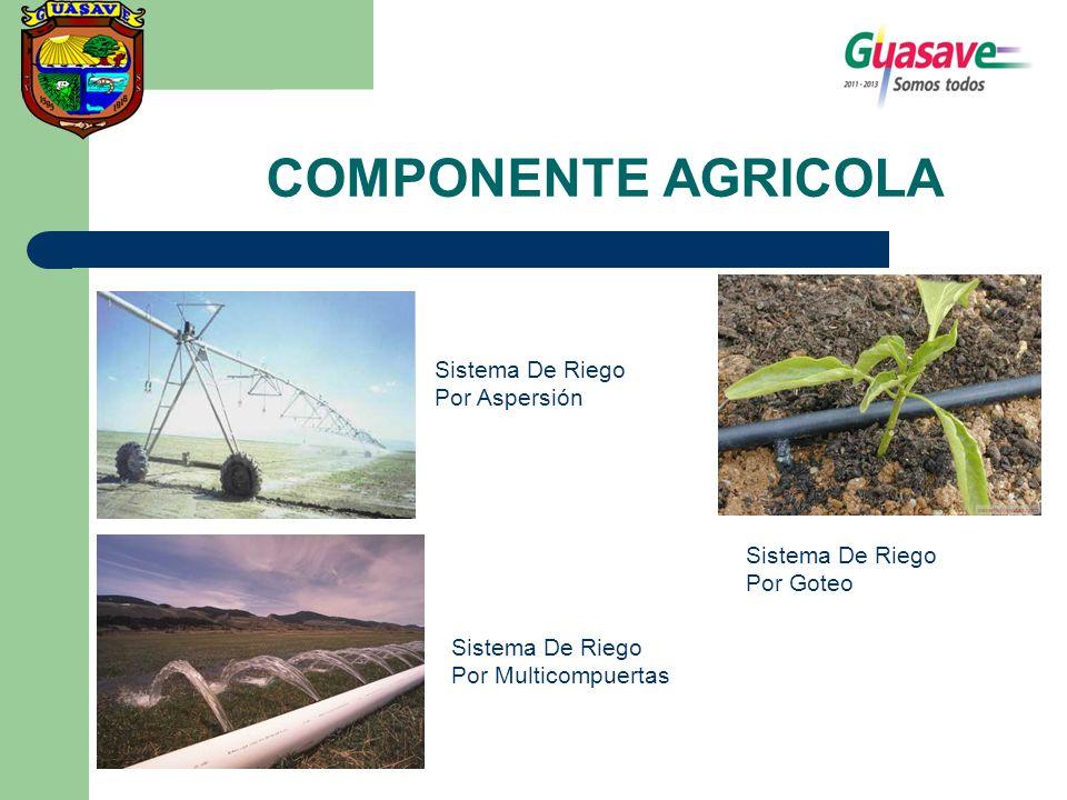 COMPONENTE AGRICOLA Sistema De Riego Por Aspersión Sistema De Riego Por Multicompuertas Sistema De Riego Por Goteo