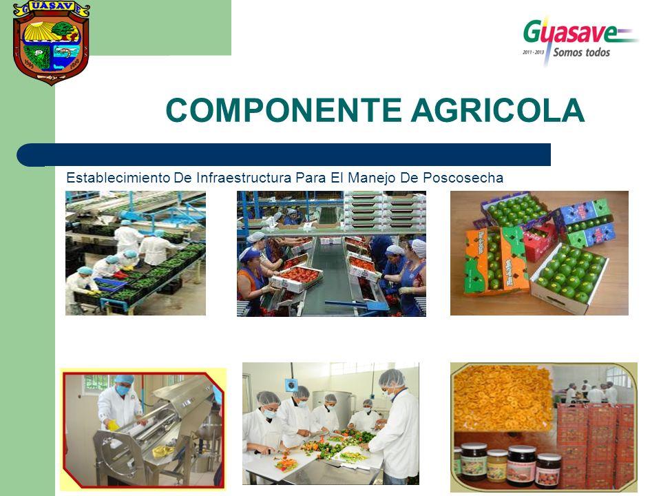 COMPONENTE AGRICOLA Establecimiento De Infraestructura Para El Manejo De Poscosecha