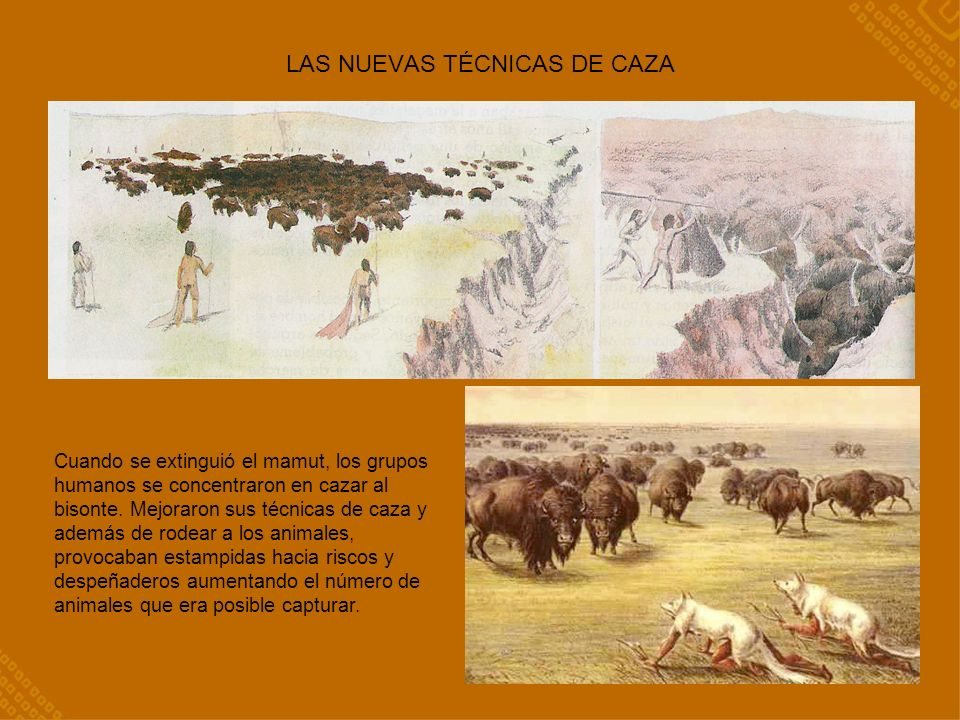 LAS NUEVAS TÉCNICAS DE CAZA Cuando se extinguió el mamut, los grupos humanos se concentraron en cazar al bisonte.