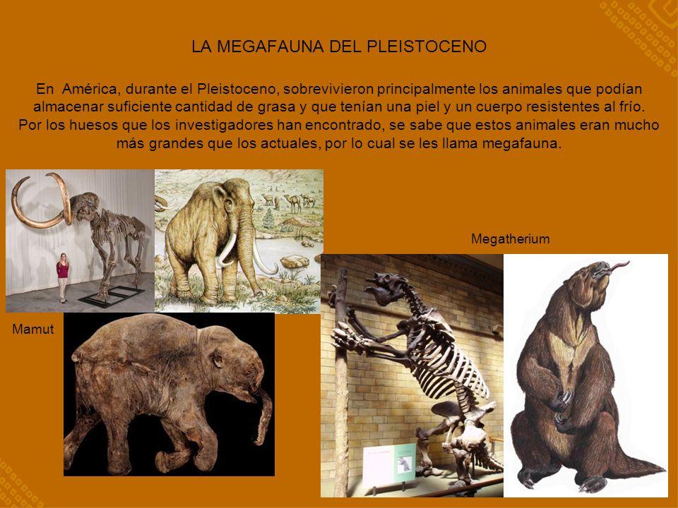 LA MEGAFAUNA DEL PLEISTOCENO En América, durante el Pleistoceno, sobrevivieron principalmente los animales que podían almacenar suficiente cantidad de grasa y que tenían una piel y un cuerpo resistentes al frío.