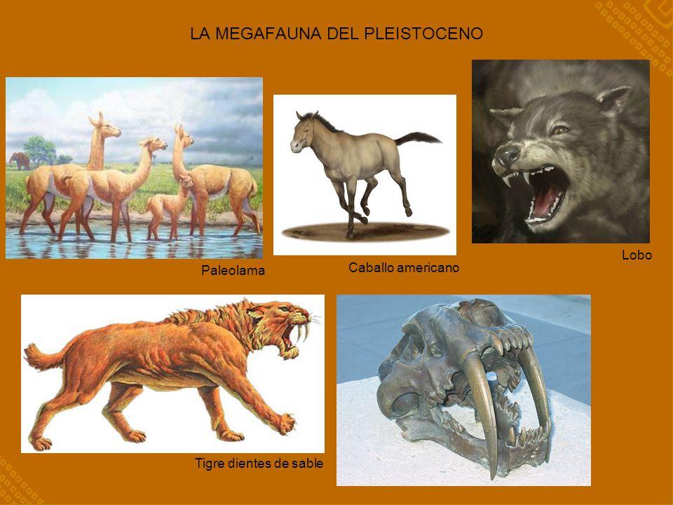 Caballo americano LA MEGAFAUNA DEL PLEISTOCENO Paleolama Tigre dientes de sable Lobo