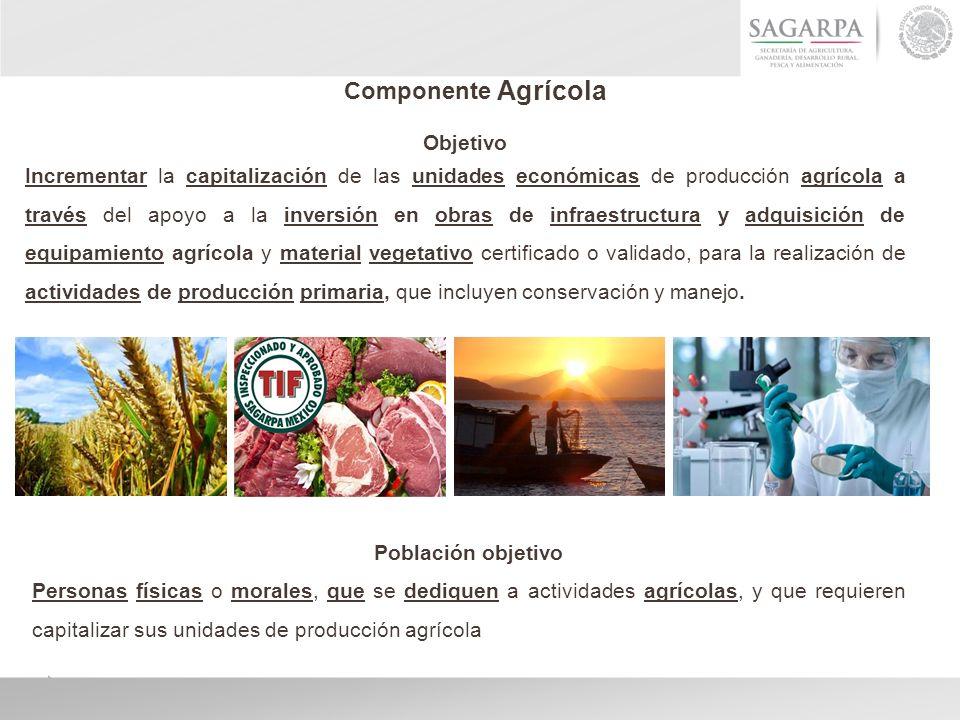 Componente Agrícola Objetivo Incrementar la capitalización de las unidades económicas de producción agrícola a través del apoyo a la inversión en obra