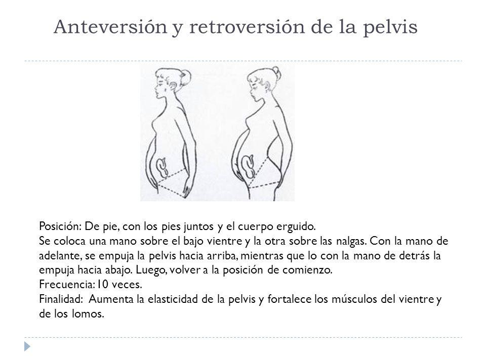 Anteversión y retroversión de la pelvis Posición: De pie, con los pies juntos y el cuerpo erguido. Se coloca una mano sobre el bajo vientre y la otra