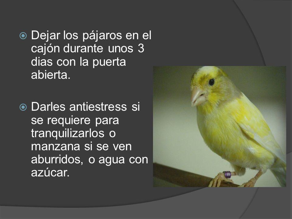 Dejar los pájaros en el cajón durante unos 3 dias con la puerta abierta. Darles antiestress si se requiere para tranquilizarlos o manzana si se ven ab