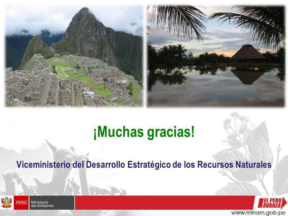 ¡Muchas gracias! Viceministerio del Desarrollo Estratégico de los Recursos Naturales