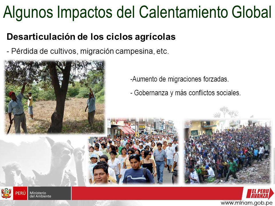 Desarticulación de los ciclos agrícolas - Pérdida de cultivos, migración campesina, etc. Algunos Impactos del Calentamiento Global -Aumento de migraci