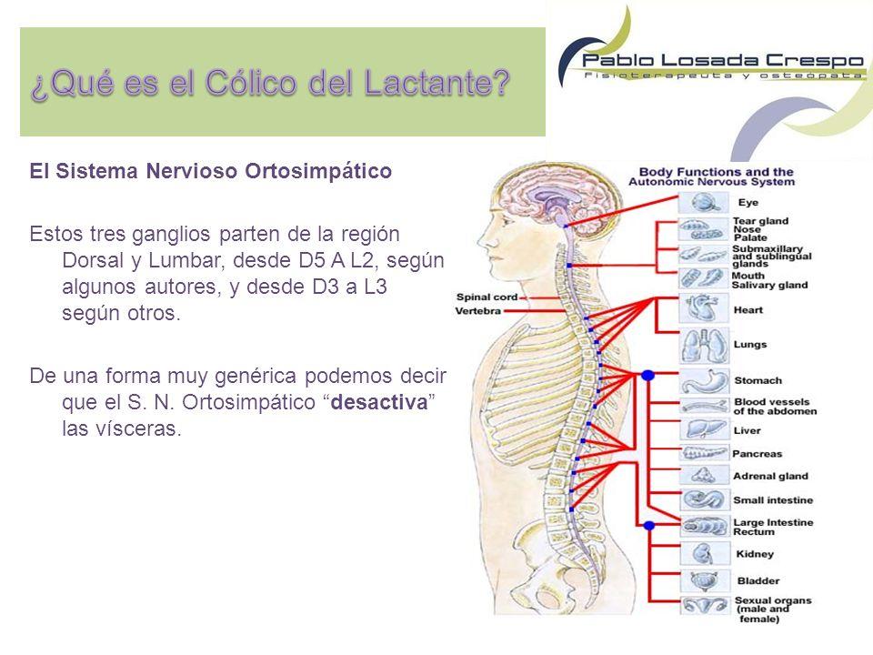El Sistema Nervioso Ortosimpático Estos tres ganglios parten de la región Dorsal y Lumbar, desde D5 A L2, según algunos autores, y desde D3 a L3 según otros.