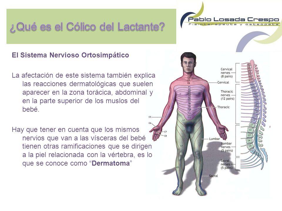 El Sistema Nervioso Ortosimpático La afectación de este sistema también explica las reacciones dermatológicas que suelen aparecer en la zona torácica, abdominal y en la parte superior de los muslos del bebé.
