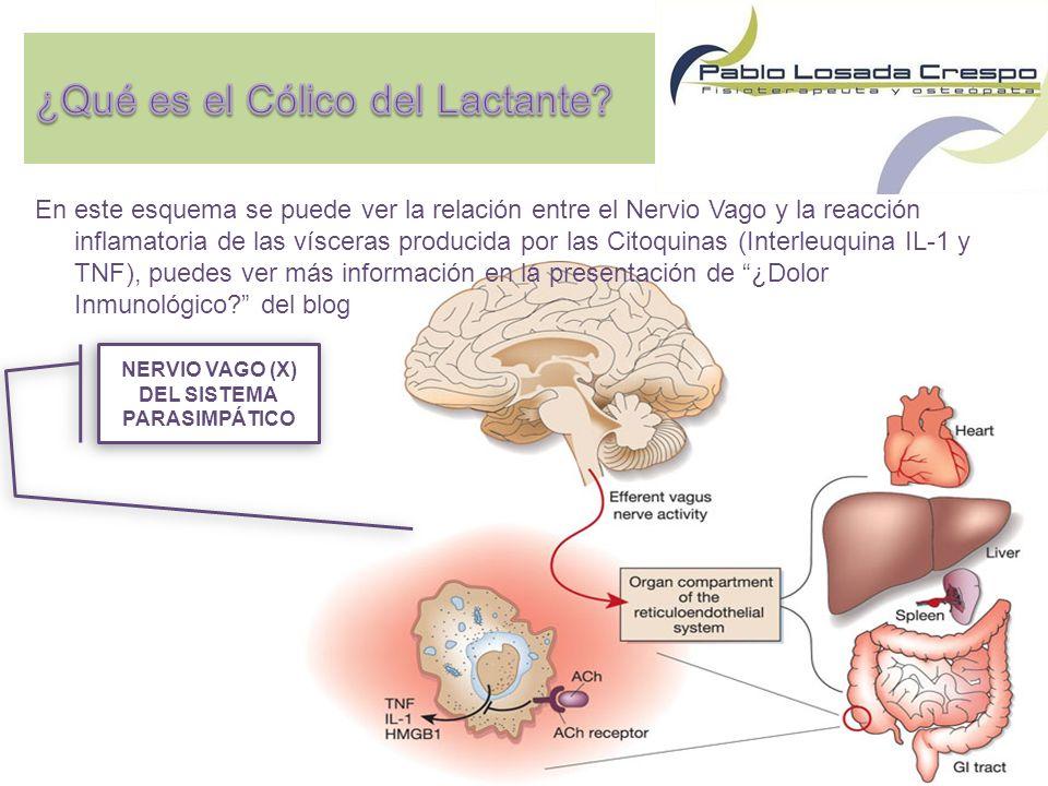 En este esquema se puede ver la relación entre el Nervio Vago y la reacción inflamatoria de las vísceras producida por las Citoquinas (Interleuquina IL-1 y TNF), puedes ver más información en la presentación de ¿Dolor Inmunológico.