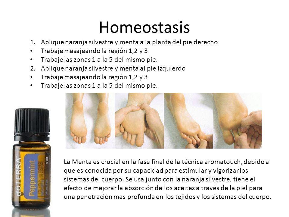 Homeostasis La Menta es crucial en la fase final de la técnica aromatouch, debido a que es conocida por su capacidad para estimular y vigorizar los si