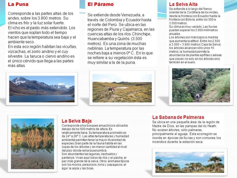 La Puna Corresponde a las partes altas de los andes, sobre los 3.800 metros.