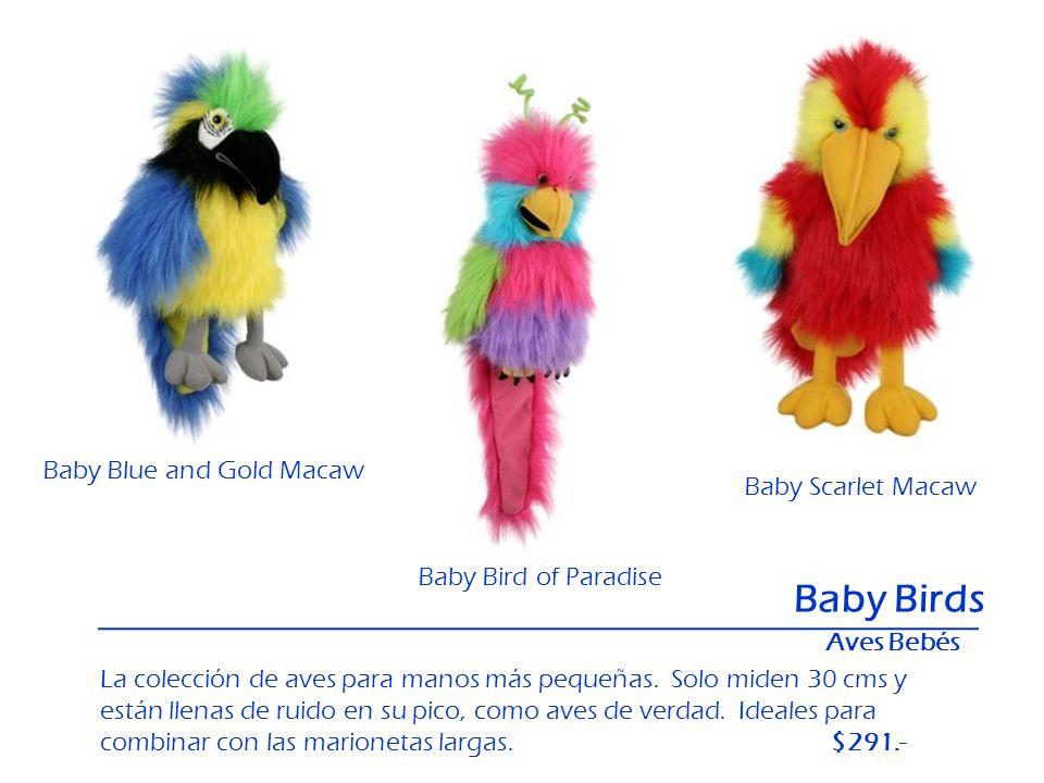 Baby Blue and Gold Macaw Baby Birds Baby Scarlet Macaw Baby Bird of Paradise Aves Bebés La colección de aves para manos más pequeñas. Solo miden 30 cm