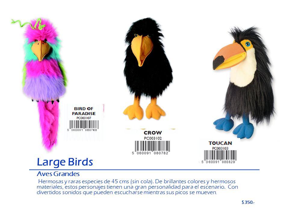 Large Birds Aves Grandes Hermosas y raras especies de 45 cms (sin cola). De brillantes colores y hermosos materiales, estos personajes tienen una gran