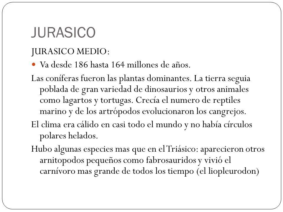JURASICO JURASICO MEDIO: Va desde 186 hasta 164 millones de años. Las coníferas fueron las plantas dominantes. La tierra seguia poblada de gran varied