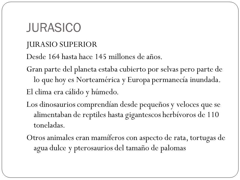 JURASICO JURASIO SUPERIOR Desde 164 hasta hace 145 millones de años. Gran parte del planeta estaba cubierto por selvas pero parte de lo que hoy es Nor