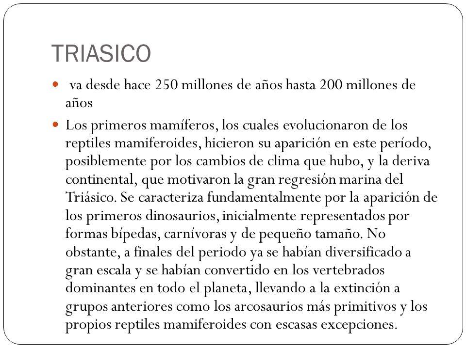 TRIASICO va desde hace 250 millones de años hasta 200 millones de años Los primeros mamíferos, los cuales evolucionaron de los reptiles mamiferoides,