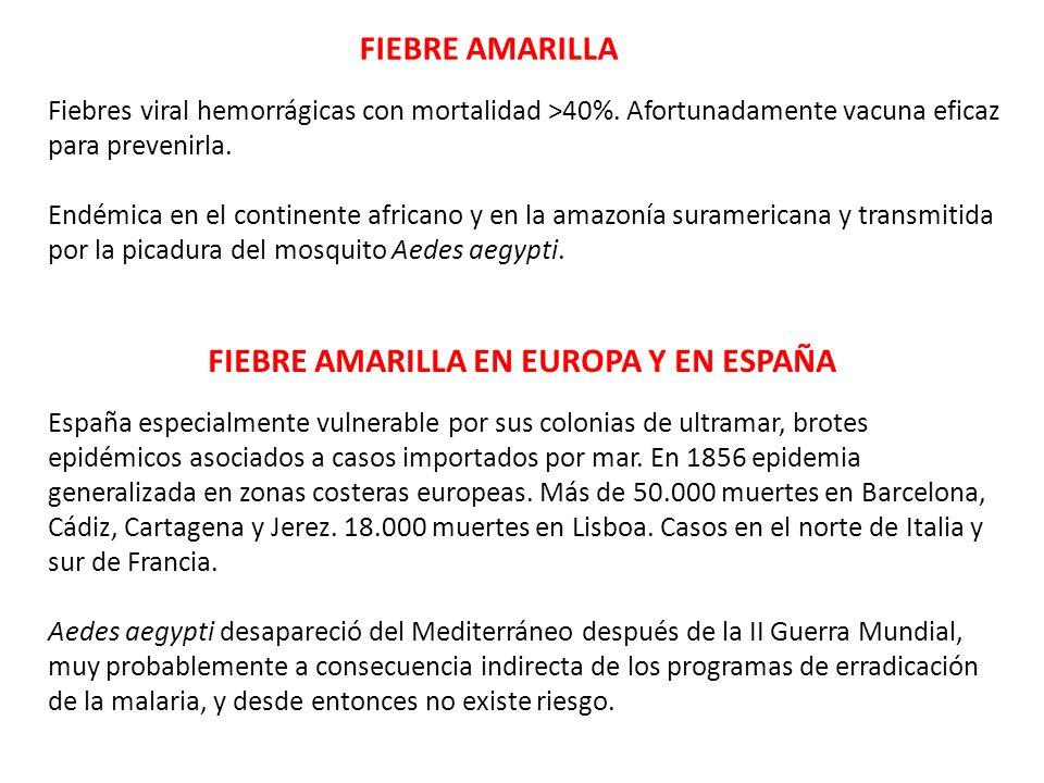 FIEBRE AMARILLA FIEBRE AMARILLA EN EUROPA Y EN ESPAÑA Fiebres viral hemorrágicas con mortalidad >40%. Afortunadamente vacuna eficaz para prevenirla. E