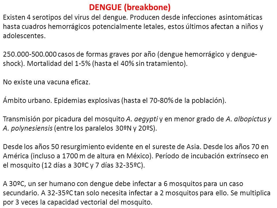 DENGUE (breakbone) Existen 4 serotipos del virus del dengue. Producen desde infecciones asintomáticas hasta cuadros hemorrágicos potencialmente letale